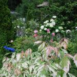 В моем саду